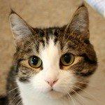 【ラブライブ!】凛ちゃん似の猫の画像を貼ってくスレ